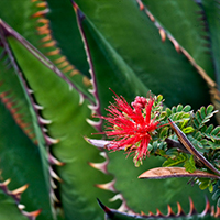 Native plant1