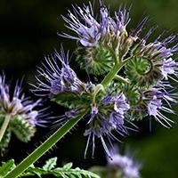 Native plant2