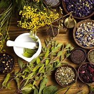 Medicinal & Edible Plants