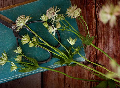 Flowers in book