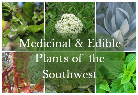 Medicinal and Herbal Plants of the Southwest
