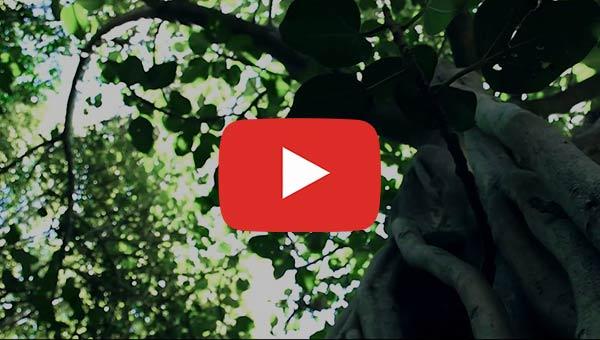 Fullerton Arboretum Aerial Tour